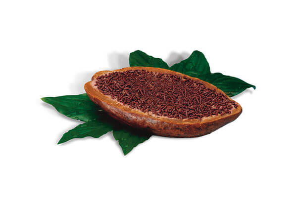 Fruta Cacao